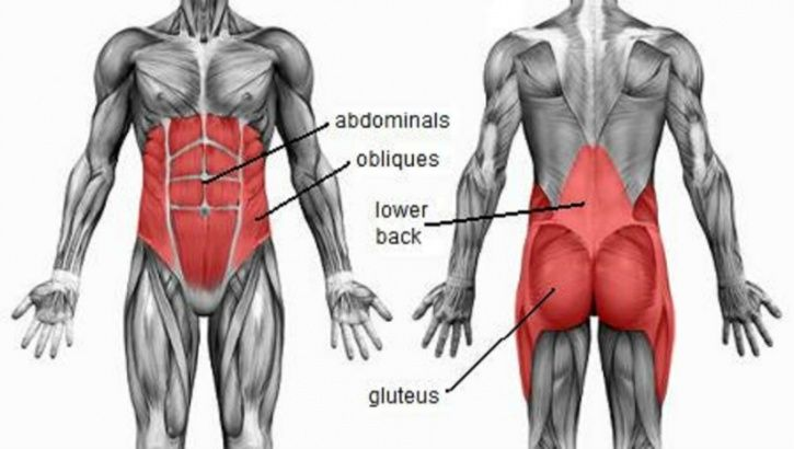 Planks hit all the major muscle groups of your core, including transverse, straight, and oblique abdominal muscles and the buttocks (glutes)