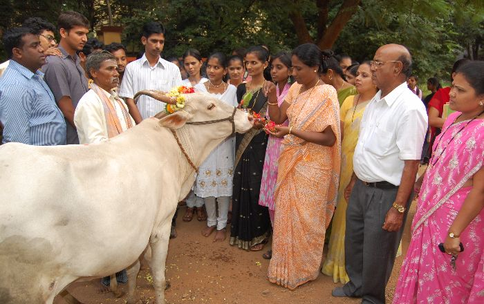 H F Cattle India Government Bans...