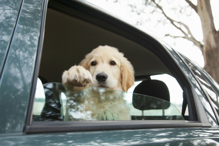 """every year, dogs suffer and die when their guardians make the mistake of leaving them in a parked car—even for """"just a minute""""—while they run an errand!"""