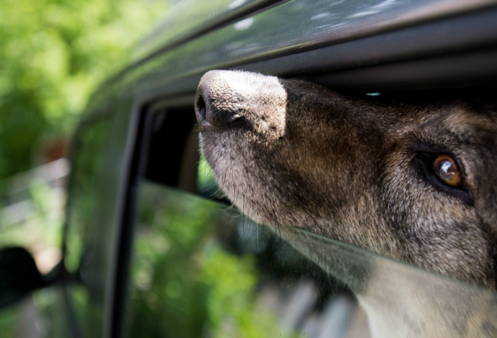 Parked cars are deathtraps for dogs: On a 78-degree day, the temperature inside a parked car can soar to between 100 and 120 degrees in just minutes, and on a 90-degree day, the interior temperature can reach as high as 160 degrees in less than 10 minutes