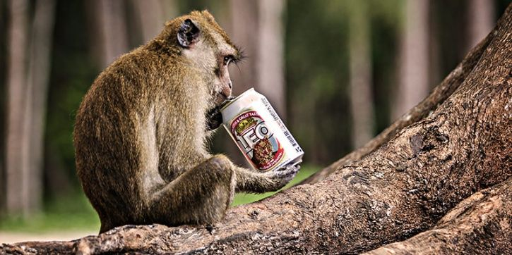 Does alcohol bring out emotions that you find are otherwise hard to express? The truth is that our relationship with alcohol dates back to thousands of years. The 'drunken monkey hypothesis', an age-old concept, gave rise to the idea that our human ancestors leaned to associate ripe fruit with the smell and taste of alcohol in it.
