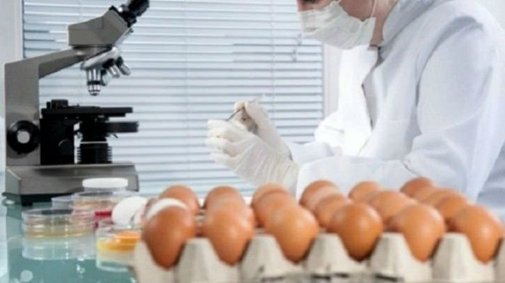 Recently, a number of eggs in the domestic market, in retail shops were collected and tested and were found to contain large amounts of salmonella both on the shell and inside the egg. However, fresh eggs collected from farms indicated less salmonella contamination. Since most consumers buy eggs from retail outlets the chances of contracting salmonella infection increases.