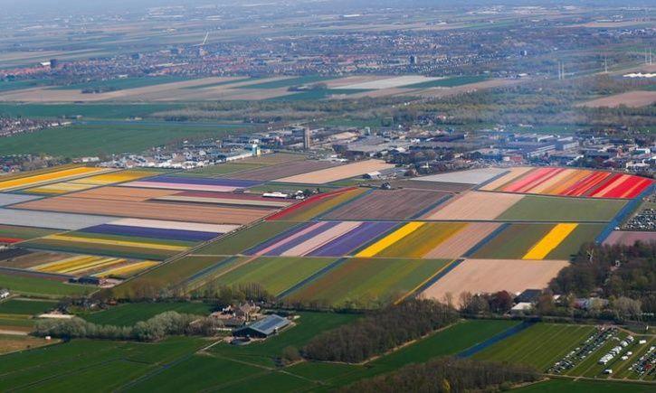 Fields of flowers 1