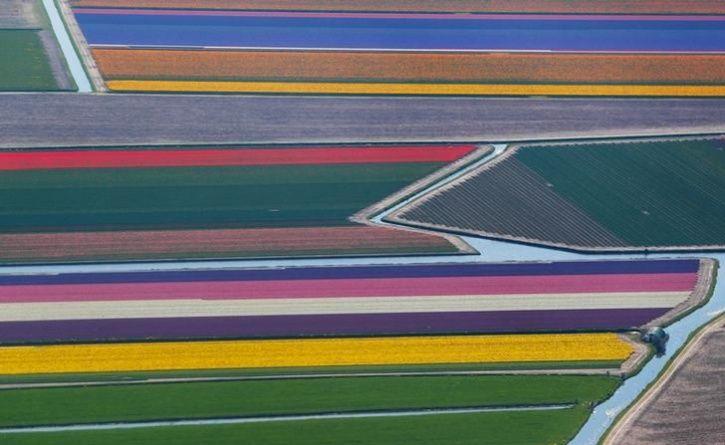 Fields of flowers 2