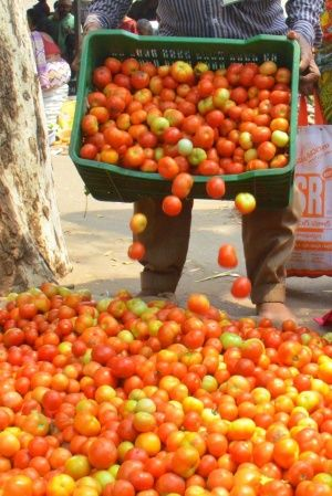 Getting Just Rs 680 For 100 Crates Of Tomatoes