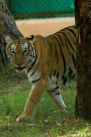 Gujarat Forest