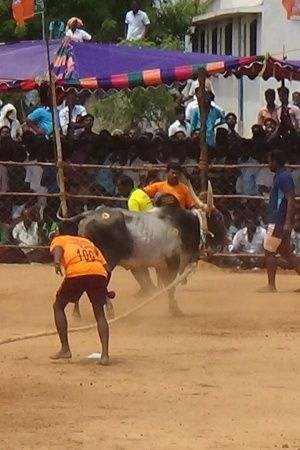 Two Spectators Gored To Death By Bulls During Manjuvirattu Event