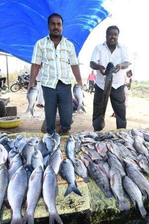 fish goa ban kerala andhra pradesh formalin