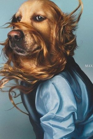 Madonna Dog Photoshoot Images Pictures People Photography Indian