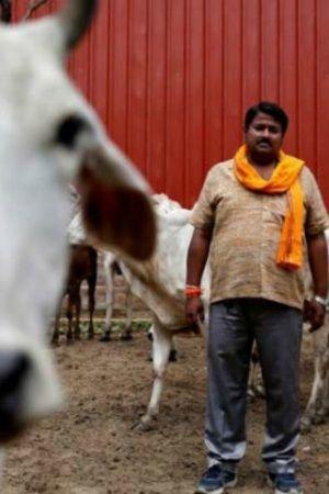 cow lynching