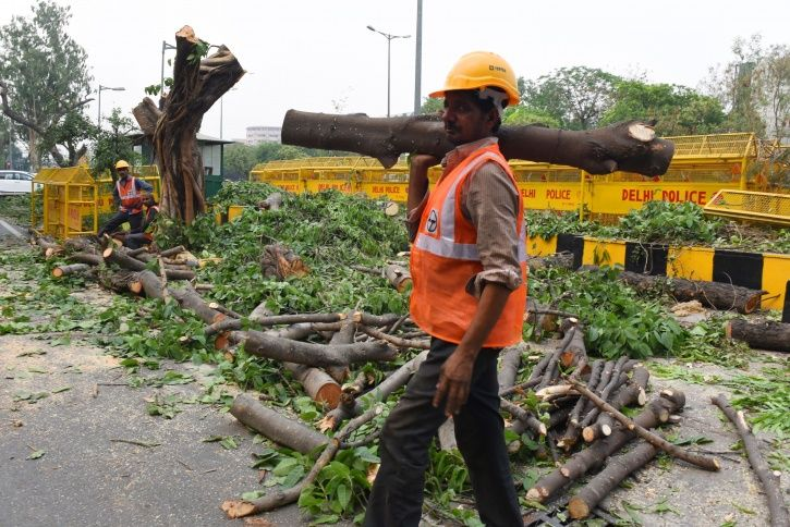 Delhi Tree Cutting