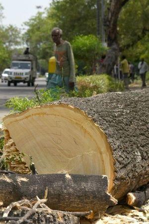 Delhi Trees