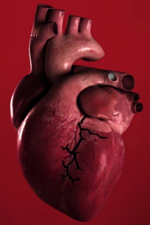 This Descriptive Video Reveals How Smoking Cigarettes Can Damage Your Heart