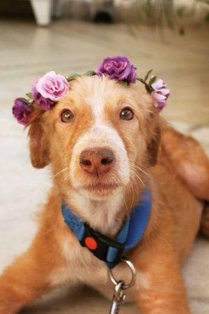 Avan dog for adoption