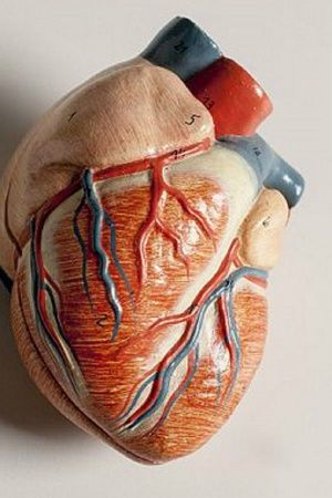 organs human body parts business illegal businessman jail medical crime fraud