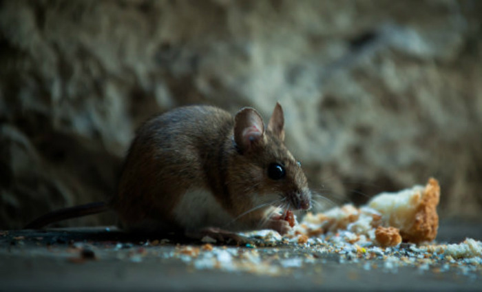 Dead Rat In Midday Meal In Delhi School, Nine Students Hospitalised