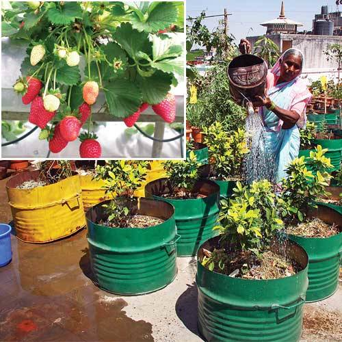 Organic terrace gardening for Terrace vegetable garden india