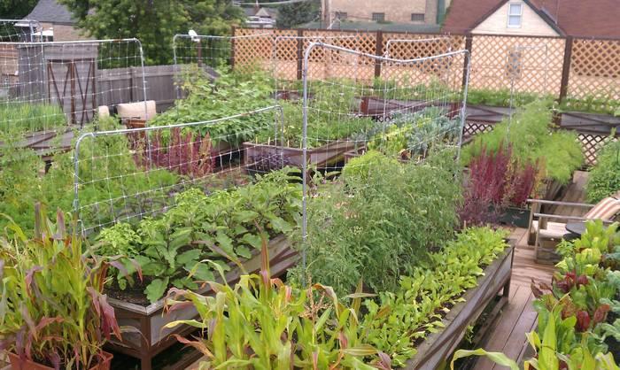 Terrace Garden Ideas Bangalore organic terrace gardening - indiatimes