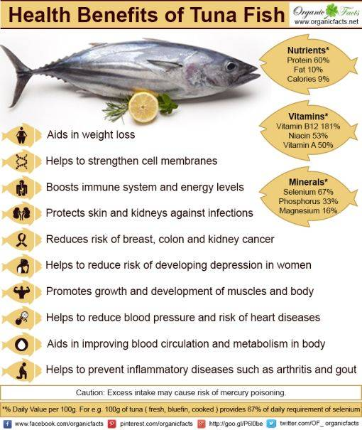 Health benefits of fish for What do tuna fish eat