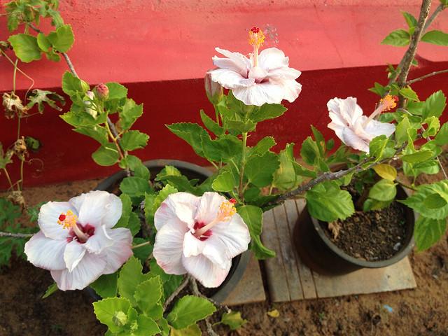 Mogra Flowers - Indiatimes.com