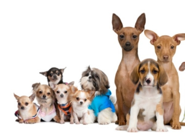 take care of your dog during christmas Here are seven things you can do to make this your pet's best winter ever 1 take care of your dog's paws a dog's legs, tail, and ears are most susceptible to frostbite, says dr rebecca ruch-gallie, service chief for the colorado state university veterinary teaching hospital's community practice.