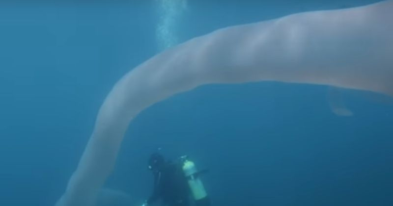 Two Divers in New Zealand Discover Mysterious Creatures