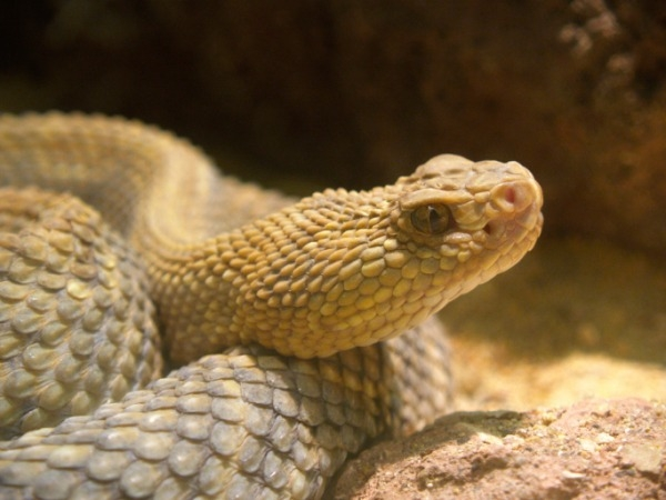 Ophidiophobia: Fear of Snakes