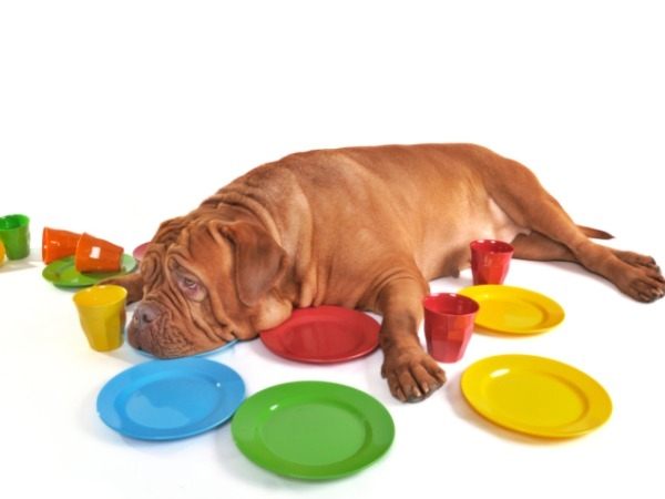 How does the excess weight affect your dog?