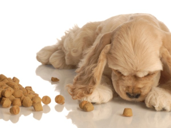 Does your dog need nutritional supplements?