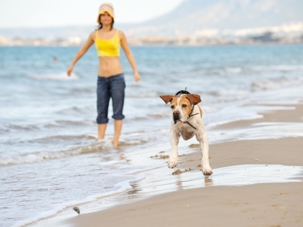 Guidelines for a healthy dog: