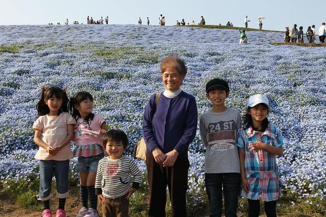 Purple harmony flowers bloom in Japan.
