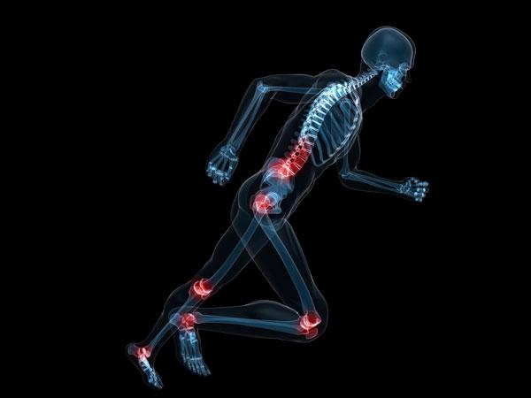 Increases bone strength