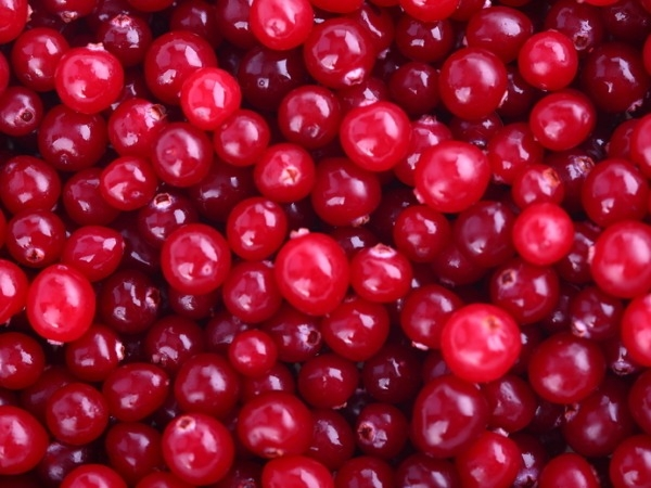 High Uric Acid Diet: Cherries