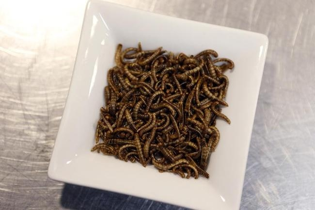 Dishes Made of Worms And Crickets