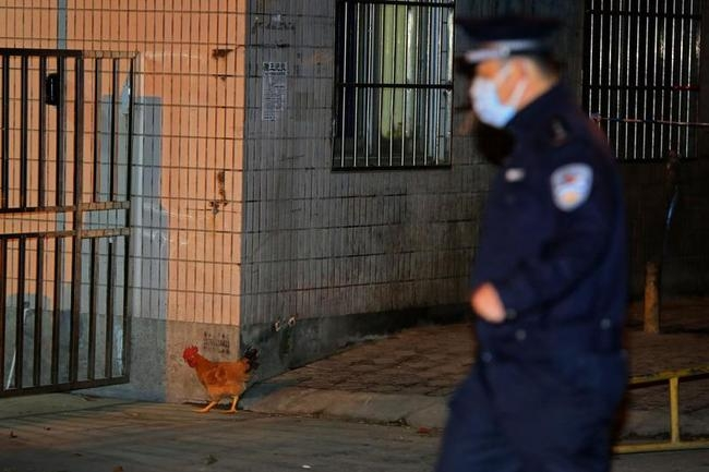 Deadly Bird Flu Virus Hits China