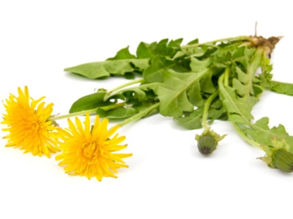 Herbs for Weight Loss # 12: Dandelions