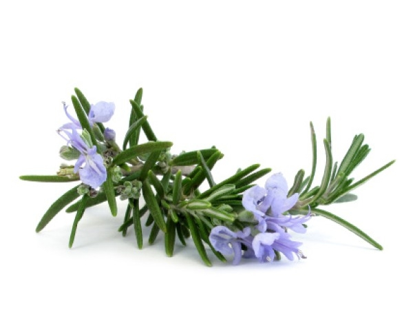 Home Remedy:Dandruff: Rosemary technique