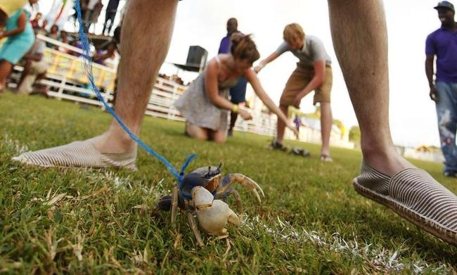 Buccoo Goat and Crab Race