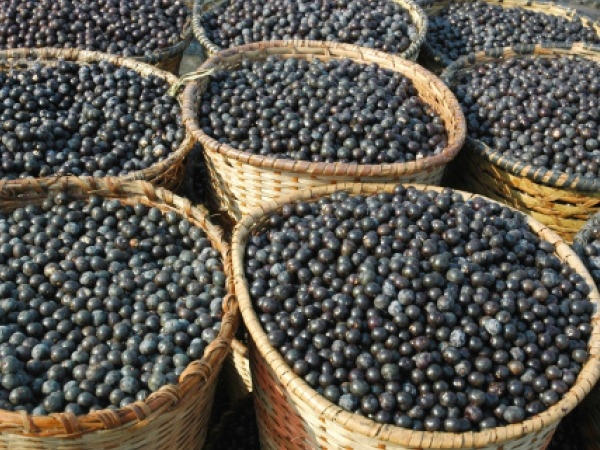 Herbs for Weight Loss # 5: Acai berry