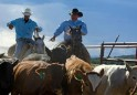 Farmers, ranchers, and other agricultural managers
