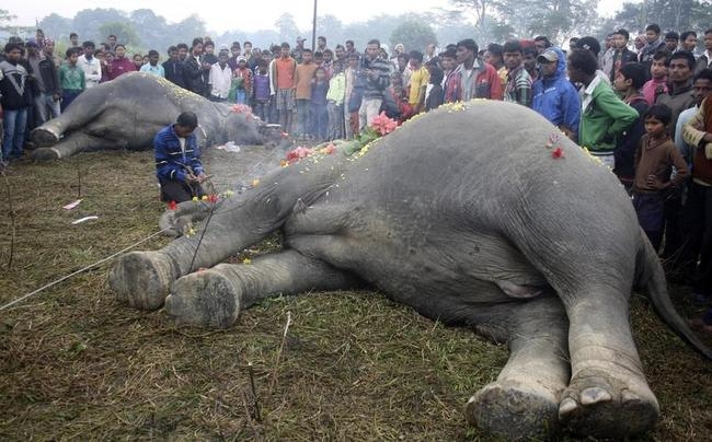 A man prays as he sits in between the bodies of two elephants after they were electrocuted at Choikotta tea garden in Jorhat