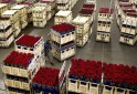 Crates of roses are prepared at a FloraHolland warehouse in Aalsmeer