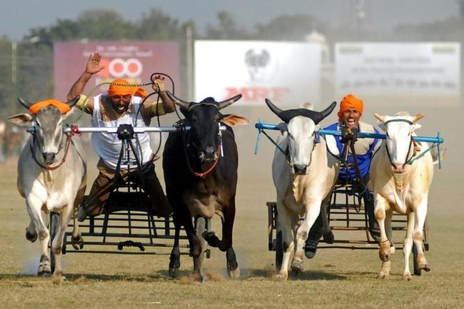Indian Rural Olympics