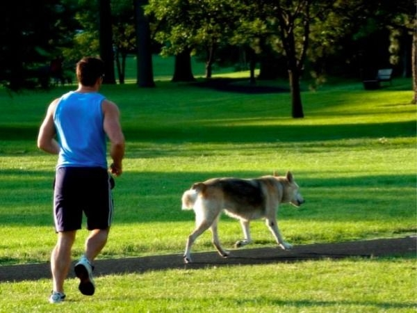 Workout with Your Pet # 8: Race with your pet