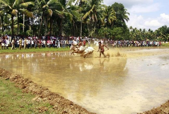 Kakkoor Kalavayal Race in Kochi