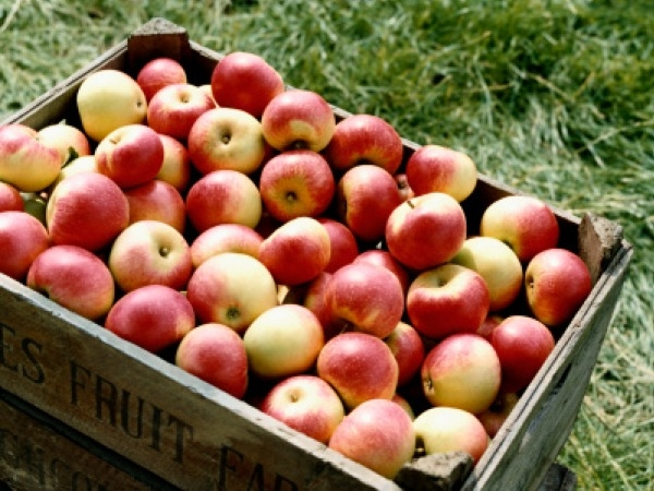 Healthy Colourful Food # 5: Apples