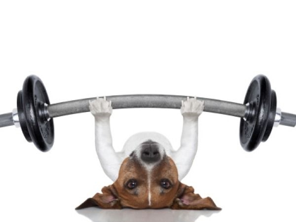 10 Ways to Workout with Your Pet