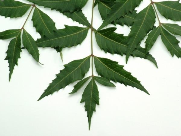 Dry Skin: 21 Herbs and Herbal Oils Good Dry Skin : Neem Oil and Neem leaves