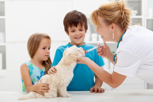Type of Doctors You Should Know # 9: Veterinarian