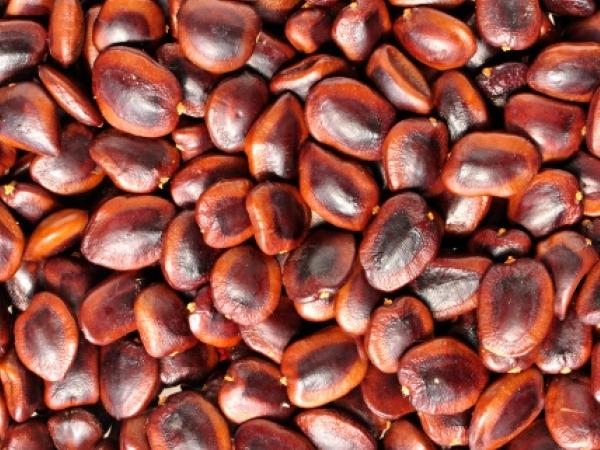 Dry Skin: 21 Herbs and Herbal Oils Good Dry Skin : Tamarind seed